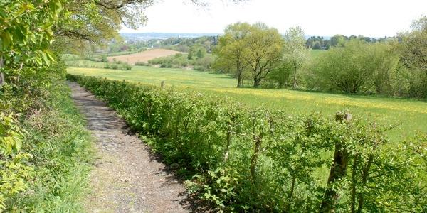 """Blick vom Wald """"Am Friederich"""" in den Aachener Kessel"""
