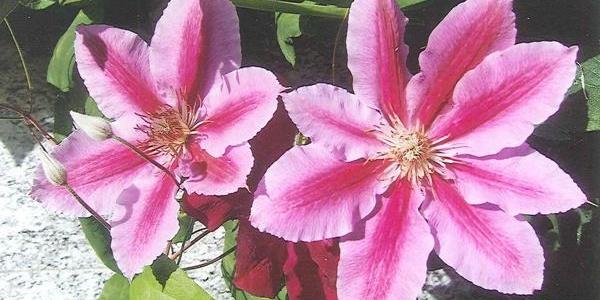 Blumen Detail