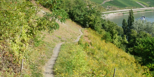Wanderpfad mit Blick auf den Bopparder Hamm