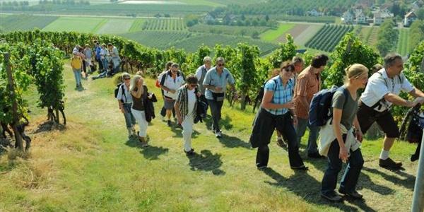 Weinwanderer