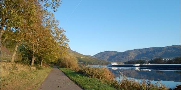 Der Mosel-Radweg hinter Lieser