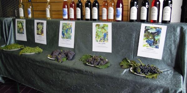 Tag der offenen Höfe - Weingut Kehrt Winden