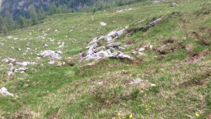 Märchenwiese auf der Hochalm