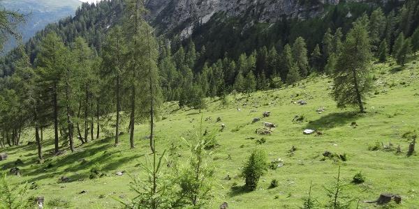 Almwiesen unter der Barbeleswand