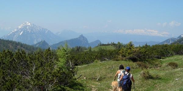 Vom Hochmölbing zur gleichnamigen Hütte geht es vorbei an Latschenfeldern