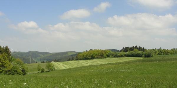 Wiesenlandschaft oberhalb von Blumenthal