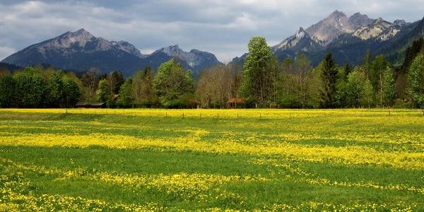 Wanderung Oberammergau - Graswang - Blick auf Scheinberg und Große Klammspitz