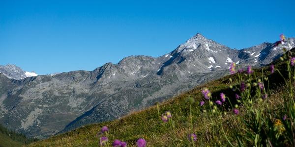 blühende Bergwiesen im Hasental