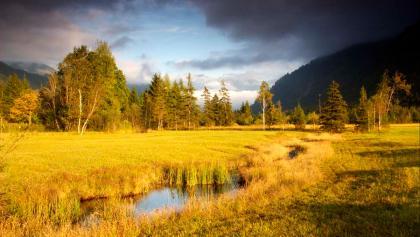 Wanderung durchs Weidmoos