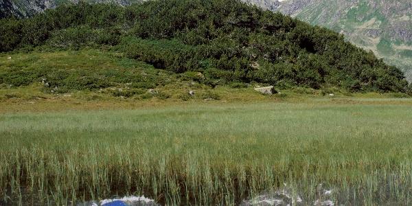 Tafamunt-Wiegensee