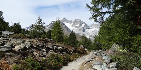 Sur le chemin de la nature, entre Riffelalp et le lac Grünsee
