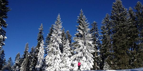 Idyllische Winterstimmung auf der Piste durch den Wald.