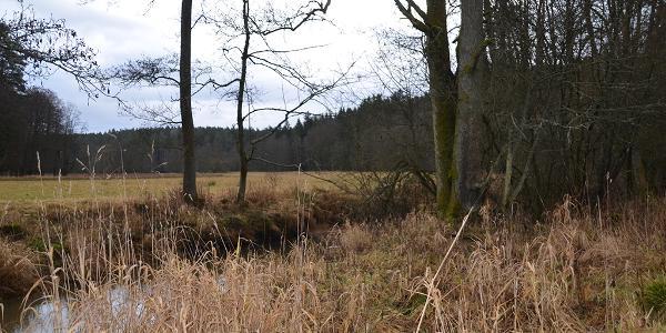 Wiesenlandschaft im Veldensteiner Forst