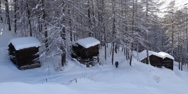 Auf dem Winterwanderweg kurz vor dem Ried