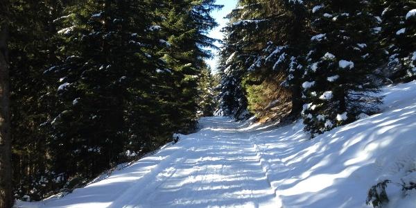 durch den Wald nach Rellseck