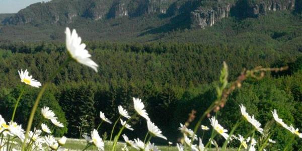 Panoramablick auf die Affensteine