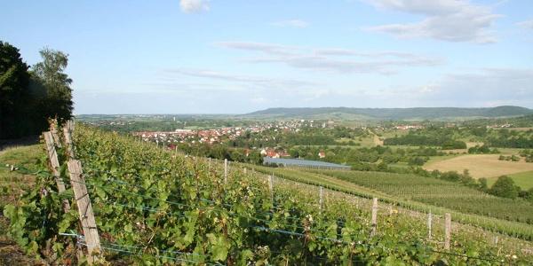 Blick vom Lindelberg auf Pfedelbach