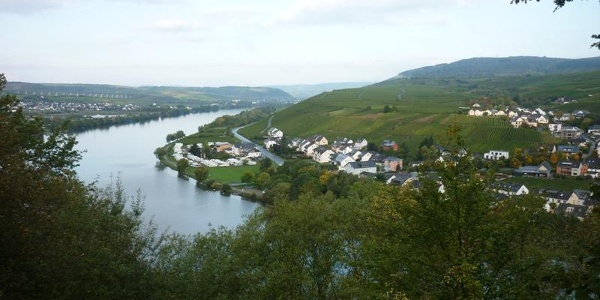 Blick vom Ortsrand Mehring moselaufwärts Richtung Riol und Longuich