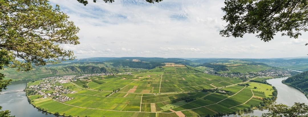 Aussichtspunkt Weißlay: Blick auf die Piesporter Moselschleife mit Piesport (links) und Neumagen-Dhron (rechts)