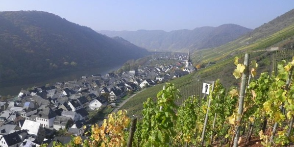 Looking from the vineyards over to Ediger-Eller