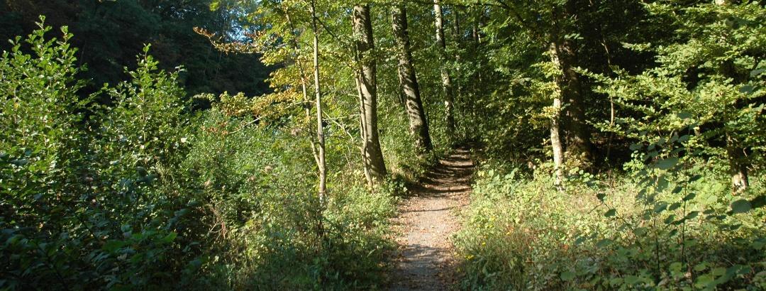 Naturschutzgebiet Köpfertal