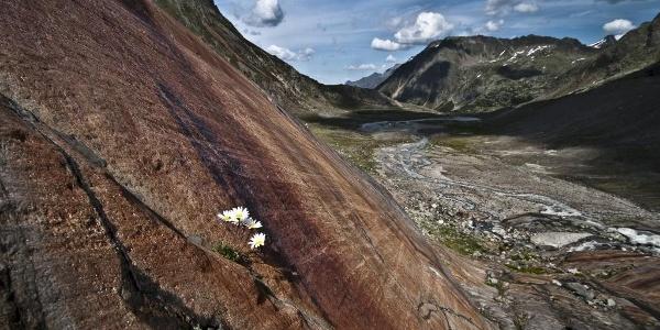 Gletscherschliff oberhalb der Sulzenau Hütte