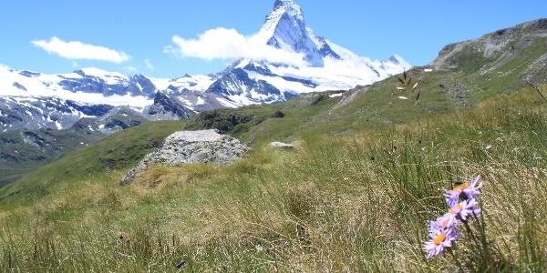 Auf Höhbalmen mit dem Matterhorn im Blickfeld
