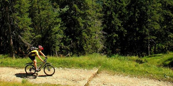 Mountainbiketour - Waldalm Runde