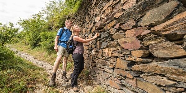 Slate dry-stone wall on the box tree path