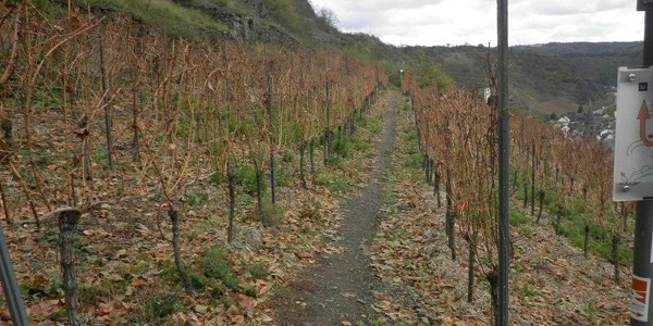 Surrounded by Hatzenport's vineyards