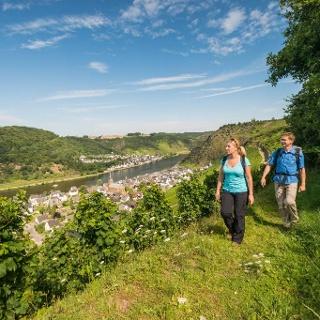 Blick auf die Mosellandschaft oberhalb der Weinberge von Alken