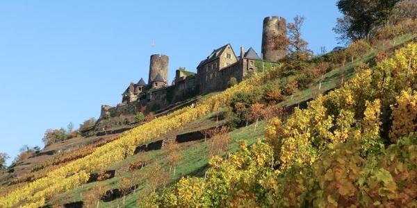 Thurant Castle above Alken vineyards