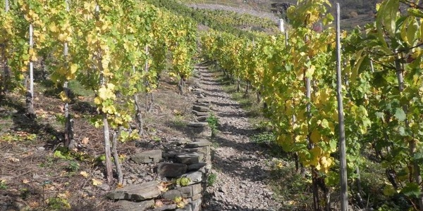 Aufstieg durch die Weinberge zum Bleidenberg