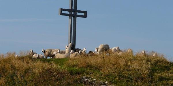 Schafe auf dem Losergipfel