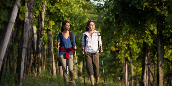 Wandern im Weingarten