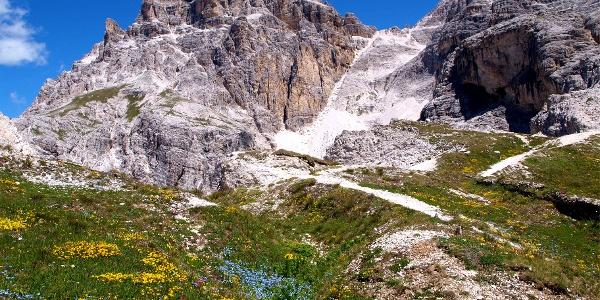 Schusterplatte 2957 m mit Blumenwiese